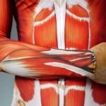 Anatomia peletonu