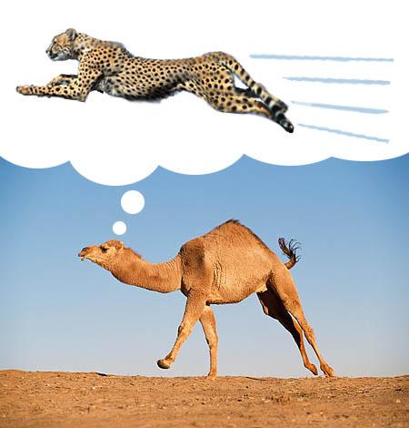 Gepard czy Wielbłąd – Czyli czy jakie ćwiczenia na odchudzanie?
