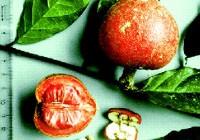 Brazeina - słodkie białko z owoców jagodowych