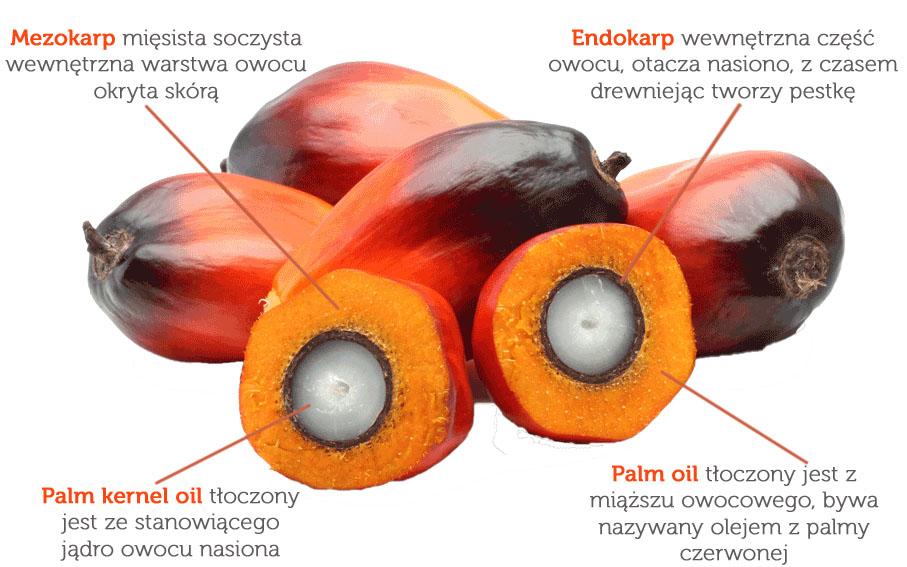 Pozyskiwanie oleju palmowego