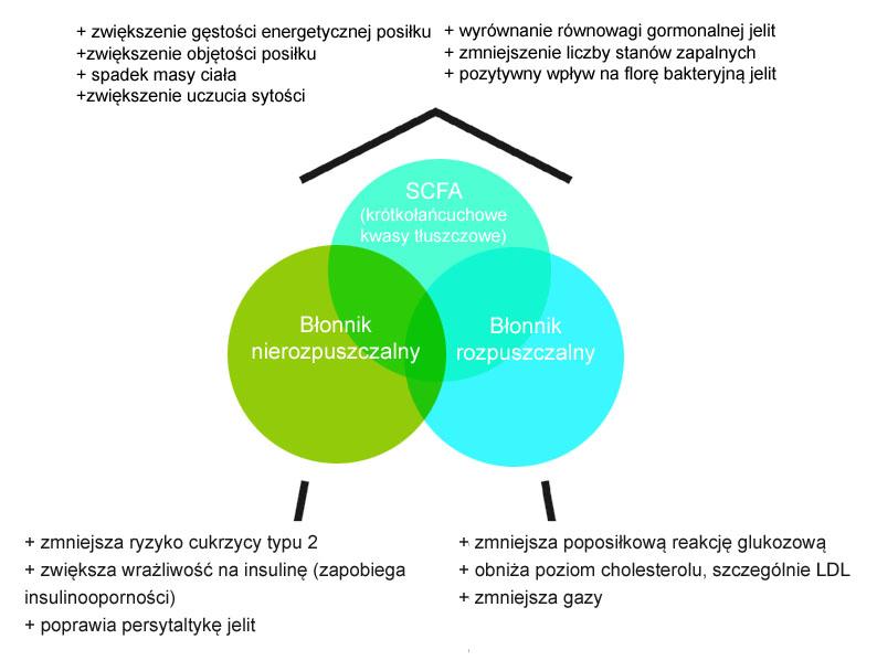 Schemat funkcjonowania błonnika w diecie