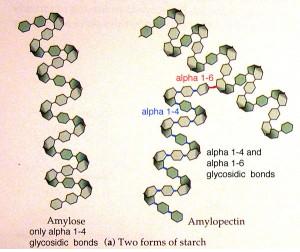 Skrobia oporna – sposób na ograniczenie przyswajania węglowodanów