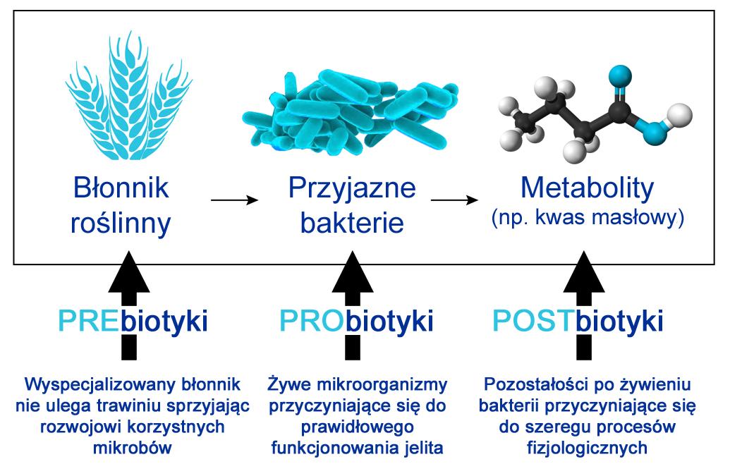 Prebiotyki, probiotyki i postbiotyki