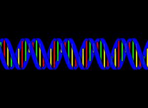 Ile białka na redukcji, ile białka na masie?